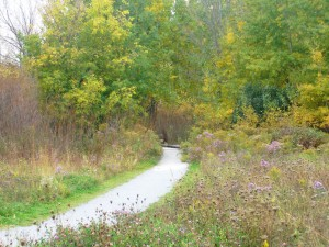 Walking Trail in Wismer Markham Real Estate
